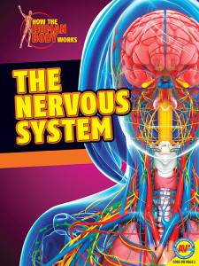 HTHBW-Nervous-System
