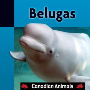 CA-Belugas